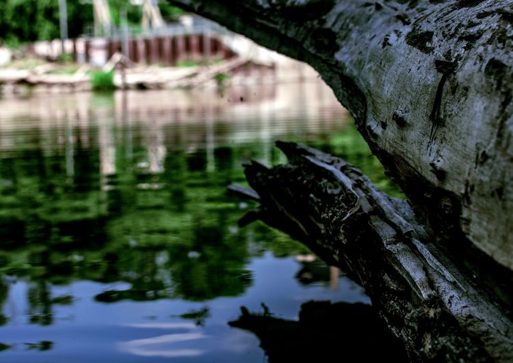 Tree in the water Water Reflections Waterfront Tree Reflection River Water Nature Outdoors Focus On Foreground First Eyeem Photo Nature Tree Trunk Tree Reflection Driftwood Plant The Great Outdoors - 2018 EyeEm Awards