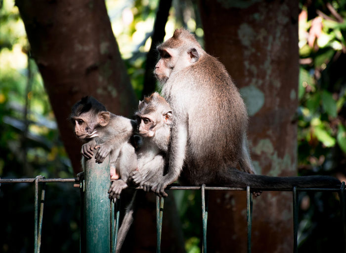 Bali, Indonesia Animal Animal Wildlife Animal Themes Mammal Animals In The Wild Group Of Animals Tree Two Animals Young Animal Primate Forest Vertebrate Focus On Foreground No People Monkey Day Plant Togetherness Nature Sitting Animal Family Outdoors Care