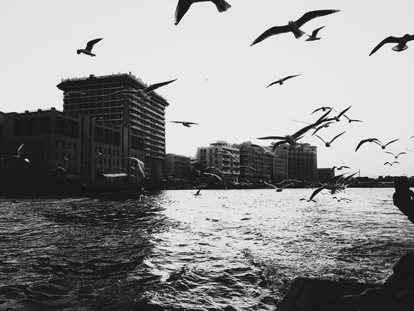 Dubai Creek Black & White Black And White Black And White Photography Flying Bird City Built Structure Animal Themes Building Exterior Animals In The Wild Outdoors Architecture Sky Animal Wildlife Flock Of Birds Urban Skyline Day Skyscraper Monocrhrome DXB Dubai Silhouette Motion City My Year My View