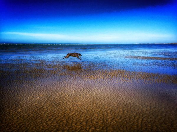 Capture The Moment LEO... The One Eyed Lurcher... I Love My Dog ❤ Lurcher