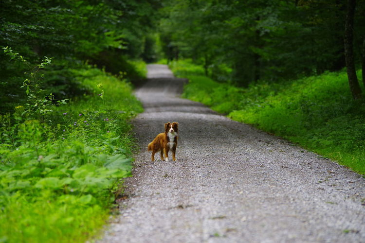 View of cat walking on road in forest