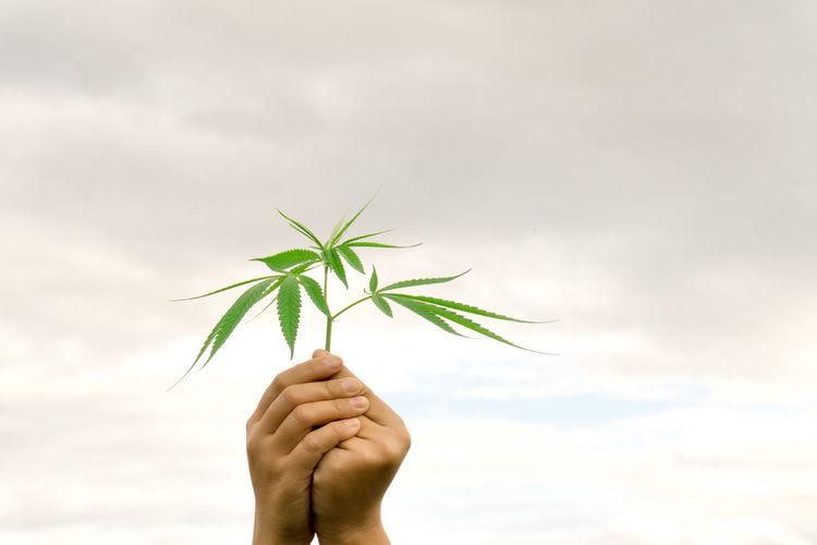 Close-Up Of Hand Holding Marijuana Against Sky