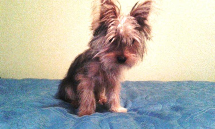 Facciaarrabbiata Pets Day Regalo Sempreinsieme Musettodolce Quantoamore Quanto Ti Voglio Bene 💗 @iCharlie