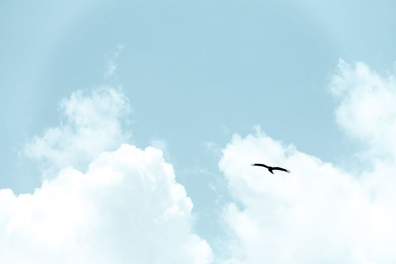 Low Angle View Of Silhouette Bird Against Sky