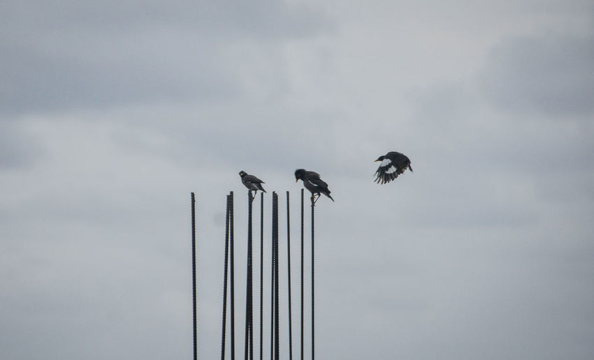 Low angle view of birds perching on pole against sky