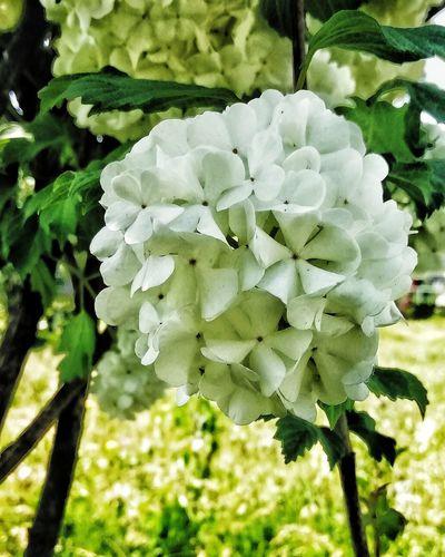 Bends Flower