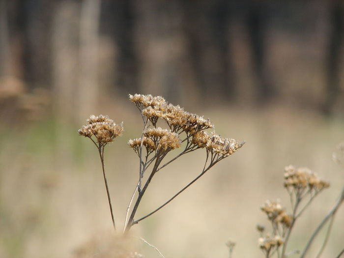 The beauty of spring Dried Land Wilted Plant Plant Stem Dead Plant Tranquility Outdoors Dried Plant Dry Close-up Focus On Foreground Day No People Nature Flower Head Growth Beauty In Nature Fragility Vulnerability  Plant Flower Flowering Plant Vulnerability