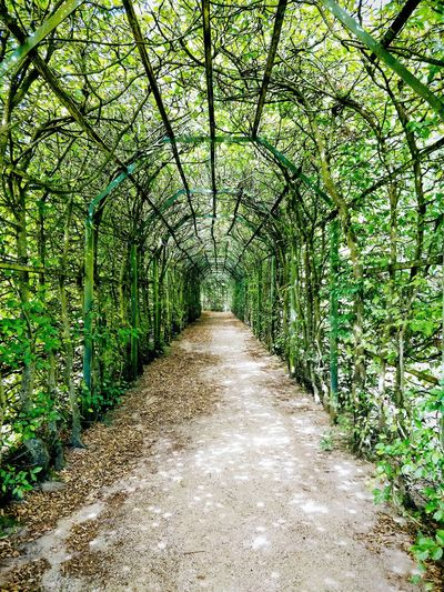 Follow me... The Way Forward Follow Me Labyrinth Arch Tree Shadow Sunlight Grass Green Color Walkway Narrow Lane