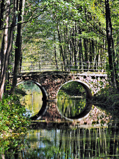 Arch Arch Bridge Autumn Bridge Bridge - Man Made Structure Exotic Place Exotic View Fallen Tree Forest Nature Non-urban Scene Plant Reflection River Scenics Tree Water Waterfront WoodLand