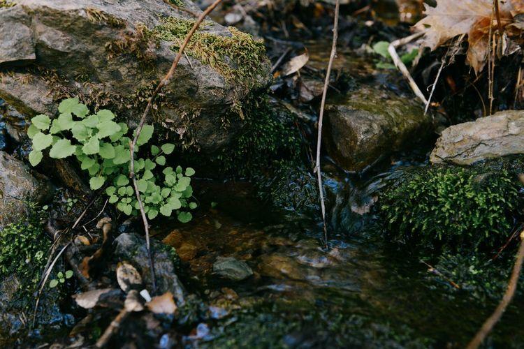 High angle view of moss growing on rocks