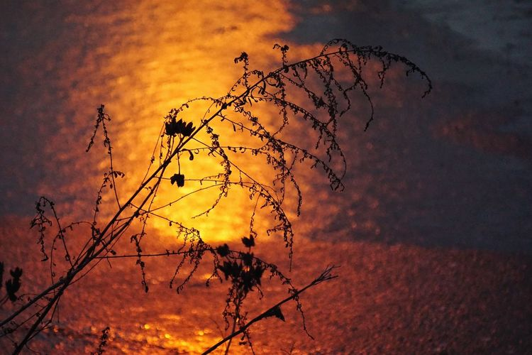 Scraggles over ice Ice Deepfreeze Weeds Sunset Icy Pond Frozen Silhouette Sunset Silhouettes Alexandria, VA