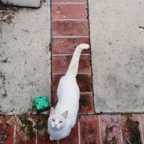 Showcase: February Cat Eyeem Cat Portraits EyeEm Cats Lover EyeEm Cats Finding New Frontiers