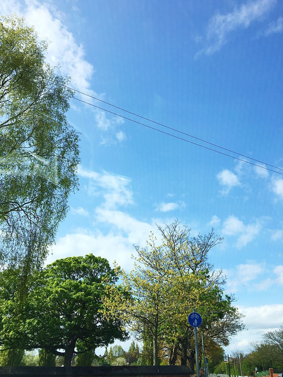 tree, low angle view, sky, cloud - sky, day, nature, outdoors, real people, growth, one person, beauty in nature, blue, men, technology, people