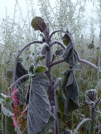 frostige Naturkunstwerke 💕💗 Monique52 Frozen Plant Beauty In Nature Frostig Kälte Dezember 2016