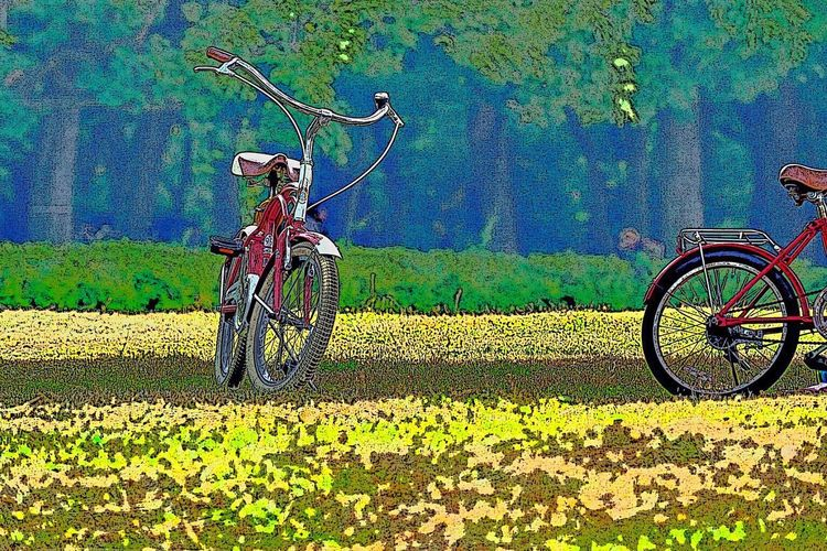 Bicycle Transportation Mode Of Transport Land Vehicle Stationary Cycling Outdoors Day Green Color No People Grass Racing Bicycle Nature Bicycle Rack First Eyeem Photo
