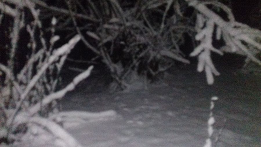 зима снет Ночь