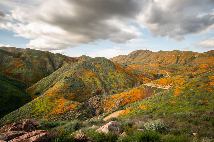 """Color blind test """"SUPER BLOOM AT WALKER CANYON Super Bloom at Walker Canyon Not much of description needed. California Poppies were everywhere. The green hills were so green that the color contrast against the orange poppies were hurting my eyes. I wondered… Is this a color blind test? How could be these poppies blooming like this? Walker Canyon, Lake Elsinore, CA Cloud - Sky Scenics - Nature Sky Beauty In Nature Mountain Tranquil Scene Tranquility Landscape Non-urban Scene Nature Idyllic Mountain Range No People Outdoors Rock Wildflowers California Poppies Super Bloom Lake Elsinore Spring California Walker Canyon, Lake Elsinore, CA"""