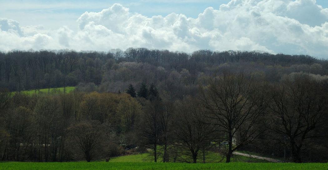 Arbres Beauty In Nature Campagne Champ Ciel Cloud Cloud - Sky Foret Grass Grassy Green Color Landscape Nature Nuage Nuages Outdoors Sky Tranquil Scene Tranquility Tree Vert Yonne Yonnetourisme Été