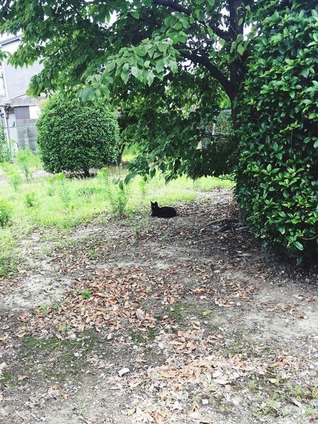 Black Cat Plant Nature Tree One Animal Day No People Growth Outdoors Animal Themes Domestic Animals Leaf Mammal Pets Grass