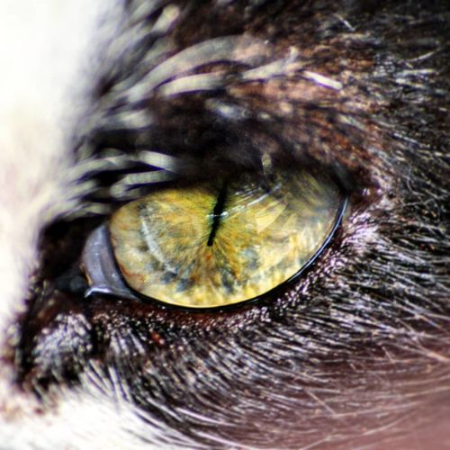 Universi in altri universi 🌙 Witch Witchcraft  Colors Colorful Cateyes Green Color Greeneyes Mystery Bastet Eyelash Eyeball Eyesight Human Eye Iris - Eye Beauty Sensory Perception Close-up Cat Domestic Cat Vision Feline Stray Animal Kitten Eyelid