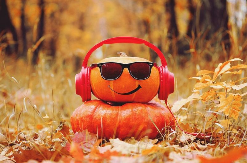 Day Nature Pumpkin Plant Halloween Celebration Orange Color