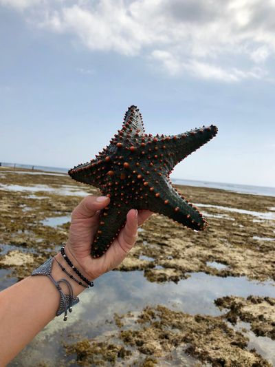 Human Hand Real People Starfish  Human Body Part One Person Beach Holding