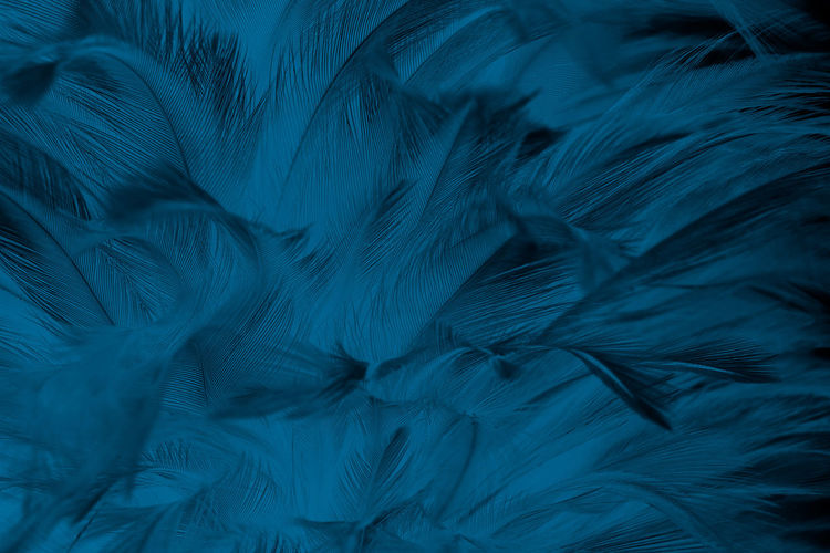 Abstract Abstract Backgrounds Animal Animal Themes Backgrounds Bed Blue Close-up Dark Feather  Full Frame Indoors  Motion Natural Pattern Nature No People Pattern Science Soft Focus Softness Textile Textured  Textured Effect