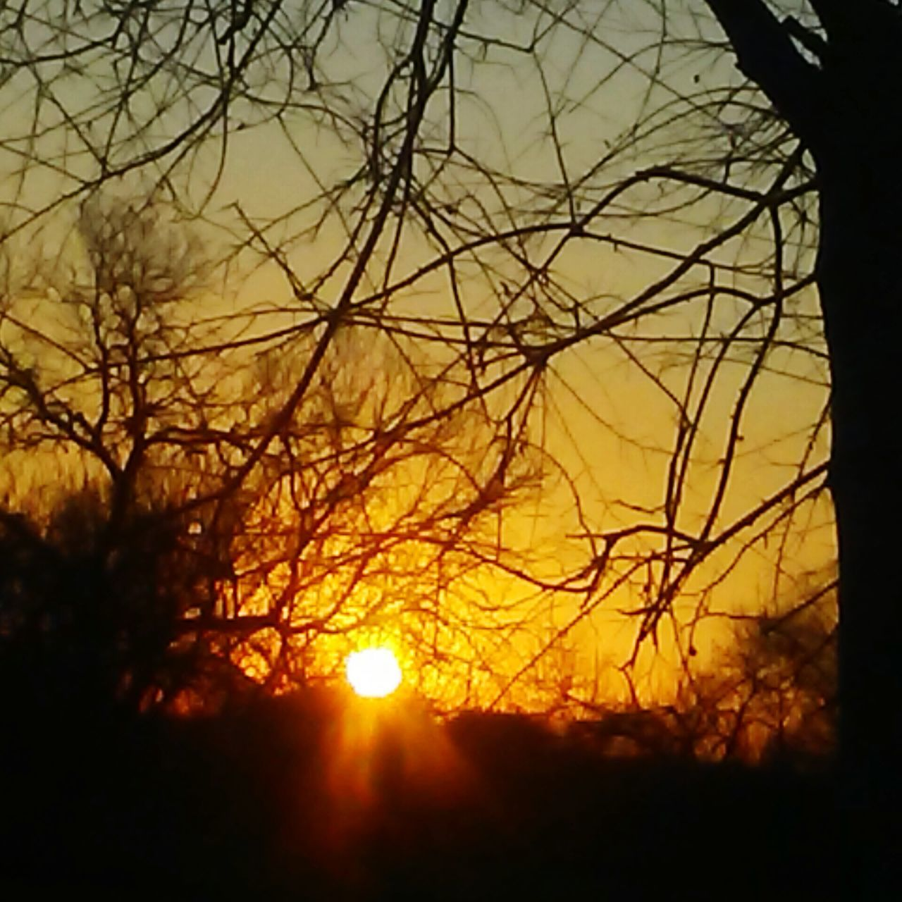 sun, sunset, nature, silhouette, beauty in nature, tranquil scene, orange color, tranquility, scenics, sunlight, bare tree, sky, outdoors, field, no people, tree, branch, close-up, day