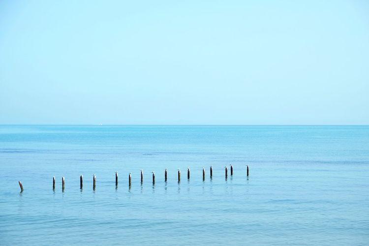 Mediterranean  Sea Beach Logs Birds Blue Serenity Tunisia Log Bird