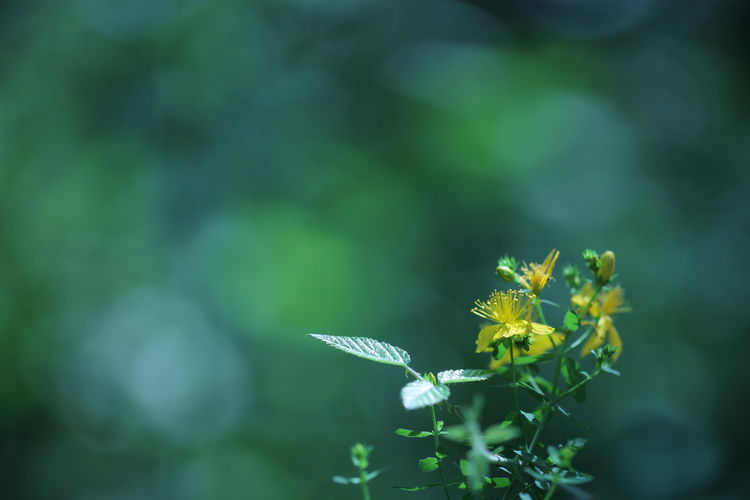 Beauty In Nature Blooming Blue Bokeh Canon Close-up Day Flower Flower Head Focus On Foreground Forest Fragility Green Growth Macro Nature Nature Photography No People Outdoors Petal Plant Selective Focus Stem Wood Yellow