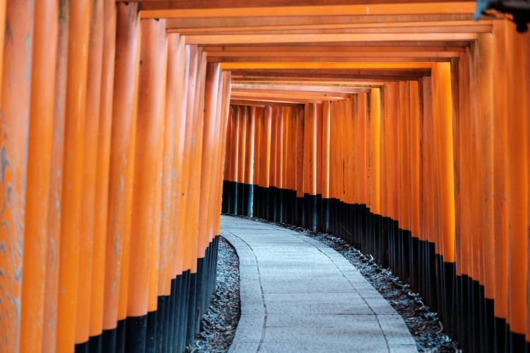 The famous fushimi inari gates, medium perspective, kyoto, japan.