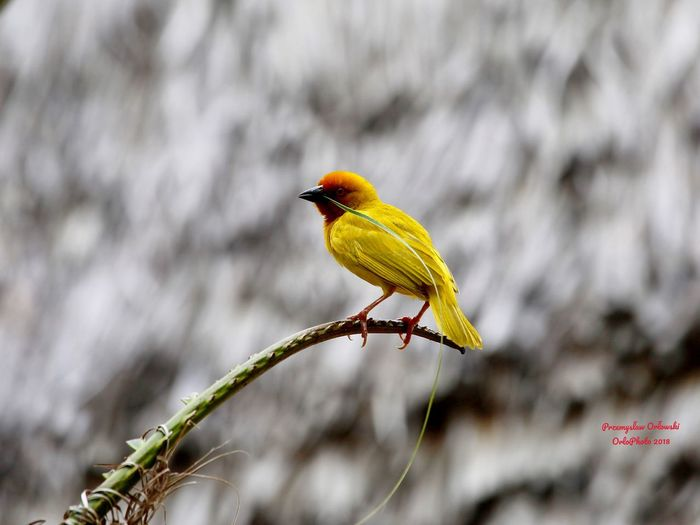 One Animal Bird Animals In The Wild Perching Animal Themes Animal Wildlife Focus On Foreground Nature Beauty In Nature