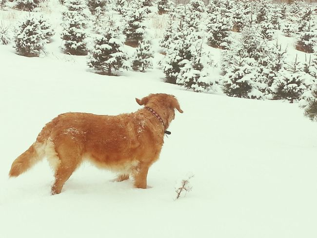 Praising The Lord for Doggy Playtime in the Deep Snow ❄