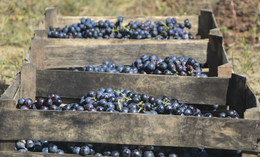 Grapes in crates on field