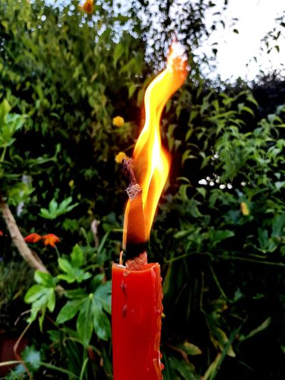 Burning Flame Heat - Temperature Tree Candle Red No People Outdoors Plant Close-up Day Nature