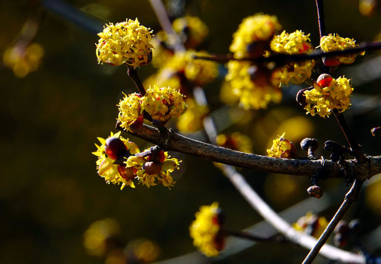 Spring is here Plant Growth Flower Flowering Plant Close-up Fragility Beauty In Nature Freshness Vulnerability  Day Nature Focus On Foreground Selective Focus No People Sunlight Outdoors Bud Yellow Flower Head