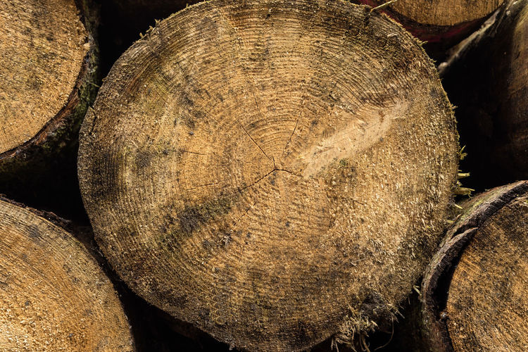 Set of felled of trees piled, close up. Texture of wood Tree Trunk Trees Felling Cut Felled Tree Felled Trunks Cutting Timber Nature Background Forest Texture Natural Wood Wood - Material Woods Construction Material Rough Logging Fell Lumberjack Pile Pile Of Wood Ground