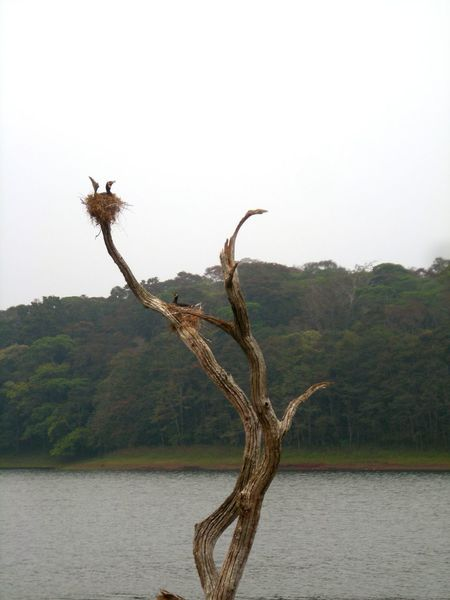 Nature Wilderness Animal Wildlife Bird Lake Animals In The Wild Beauty In Nature Thekkadi Kerala, India