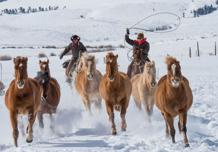 Feb 2019 - Music Meadows Ranch Colorado Ranch Life Working Animals Herd Of Horses Snow Winter Cold Temperature Group Of Animals Domestic Animals Animal Themes Warm Clothing Horse Outdoors Land Day Field Lasso Driving Cowboy Herbivorous Livestock Domestic Vertebrate Mammal Animal