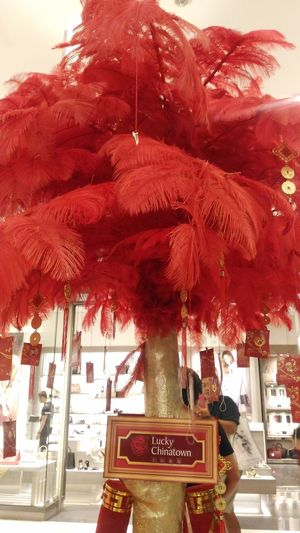Red feather tree tradition indoor decoration Celebrating Chinese New Year EyeemPhilippines