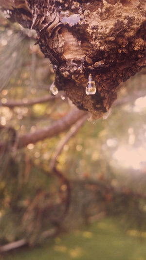 Dripping sap from a pine tree. I added the enhancement to give it an aged look