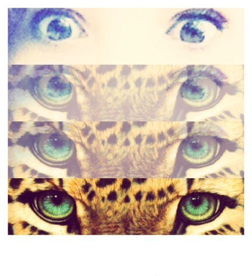 Leopard Eyes  Green Blue Eyes  Love ♥