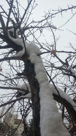 together .. Tree Snow Hanging Out Naturelovers