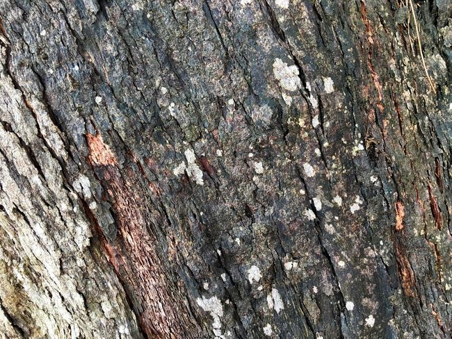 Full frame shot of Wooden texture Full Frame Backgrounds Pattern Textured  No People Day Tree Close-up Rough Growth Nature Land Weathered Beauty In Nature Wall - Building Feature Outdoors Sunlight Plant Abstract Branch