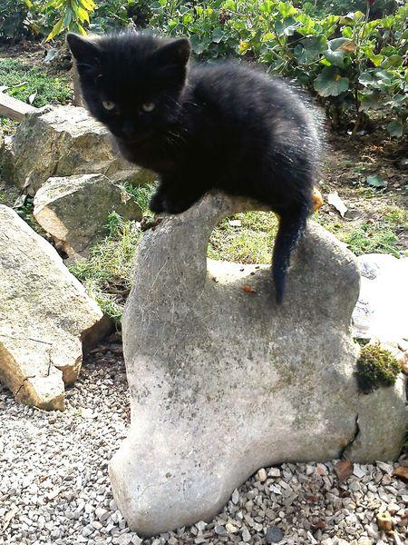 Kitty Cat Cats Black Black Cat Pets Cute Stone Garden Grandmasgarden