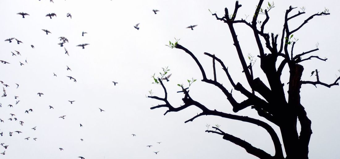Low angle view of birds on bare tree