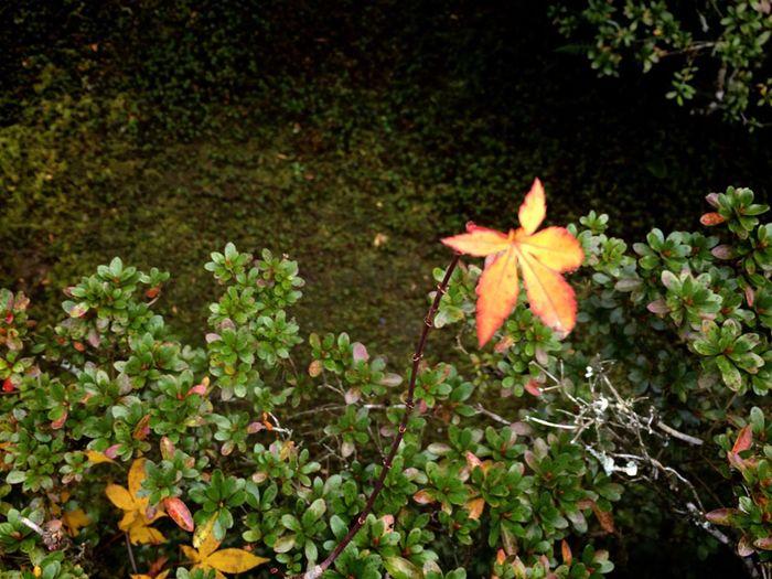 Leaf Autumn Nature Kyoto 即宗院