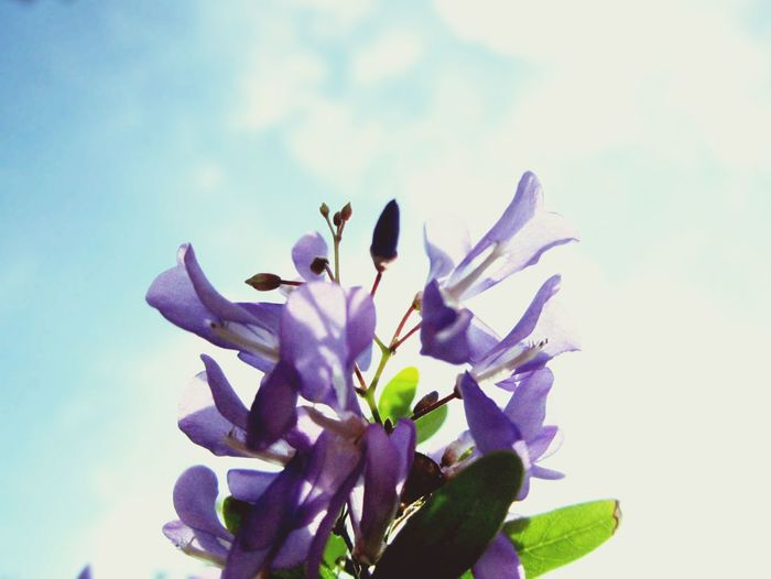 Low angle view of purple flowers blooming against clear sky
