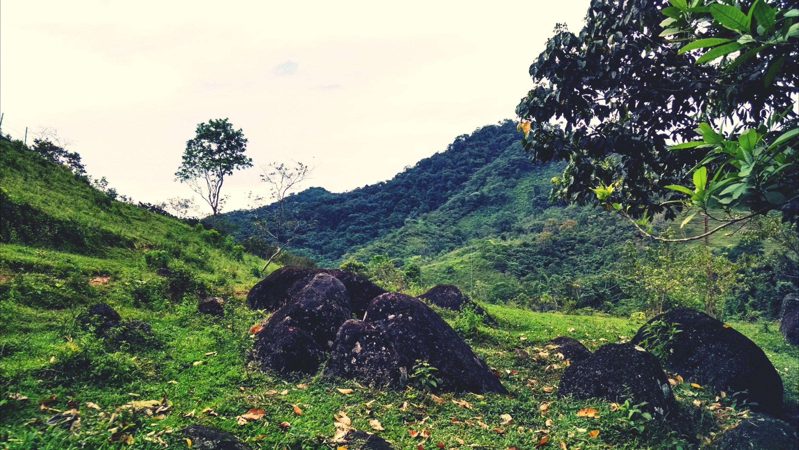 mountain, tranquility, tree, tranquil scene, scenics, green color, beauty in nature, landscape, nature, growth, sky, non-urban scene, grass, lush foliage, mountain range, plant, idyllic, remote, hill, green