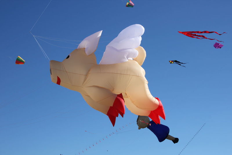Airplane Blue Day Drachenfest Flight Flying Flying Pig Hot Air Balloon Kite - Toy Mid-air Motion No People Outdoors Piggy Schwein Sky